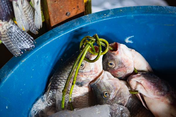 Fresh Fish @Granada