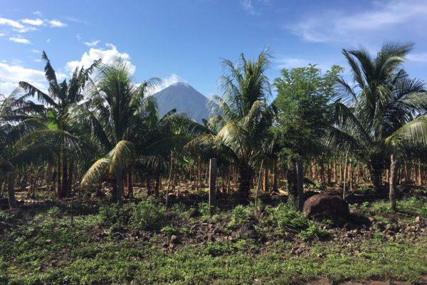 Vulkan Concepcion auf Ometepe Island