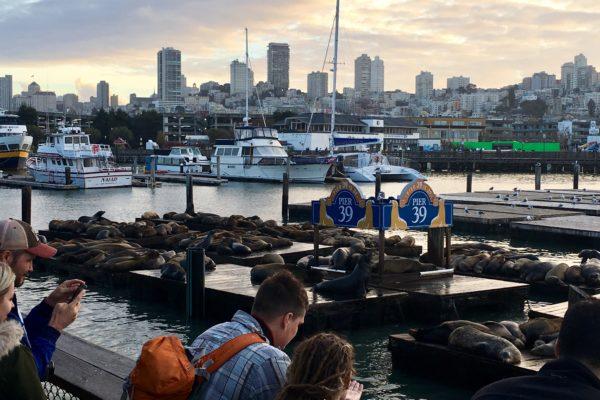 San Francisco_Seelöwen beim Fishermen's Wharf